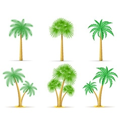 palm tree 18 vector image vector image