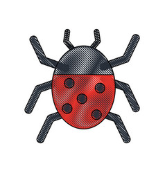 beetle insect or bug icon image vector image
