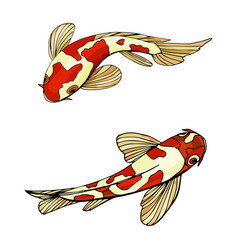 carp koi fishes vector image