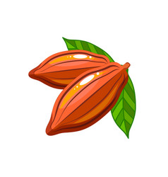 cocoa beans packaging design flat icon vector image