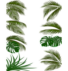Set green leaves of tropical palm trees monstera vector