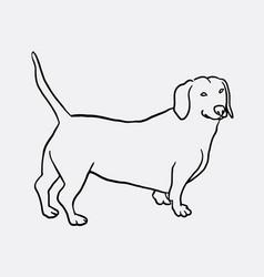 teckel dog hand drawing vector image vector image
