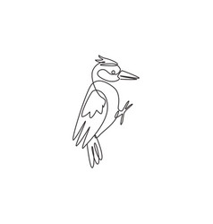 one single line drawing adorable woodpecker vector image