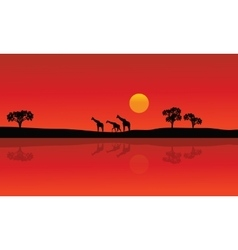 Silhouette of giraffe with red backgrounds vector image