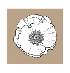 open chamomile blossom top view sketch style vector image