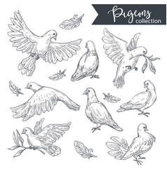 Pigeons flying and sitting doves with tree vector