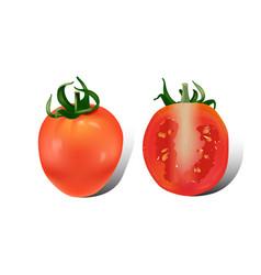tomato on white background vector image