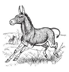 Wild donkey vintage vector