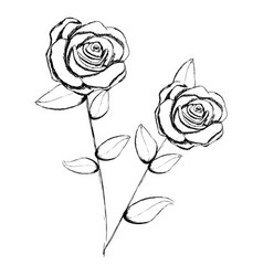 monochrome sketch with pair of rose flowers with vector image
