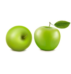 fresh green apples vector image vector image
