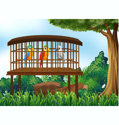 three parrot birds in wooden cage vector image vector image