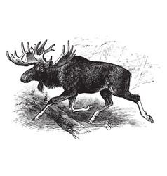 American moose vintage vector
