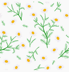 daisy flowers seamless pattern vector image