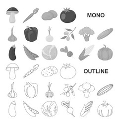 Different kinds of vegetables monochrom icons in vector