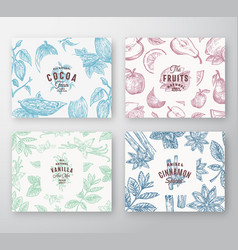 Hand drawn fruits cocoa beans mint nuts vector