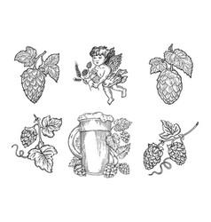 Beer hops set sketch vector
