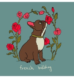 French bulldog with roses vector