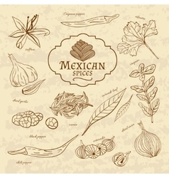 Set of spices and herbs cuisines of the world vector image