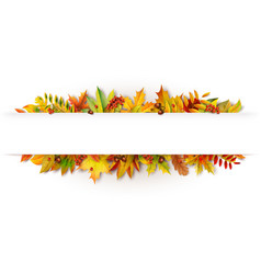 Autumn white banner decorated with fallen leaves vector