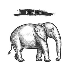 elephant sketch zoo and african jungle wild animal vector image