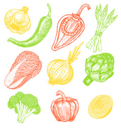Set hand drawn elements sketch style vegetables vector