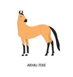 Akhal-teke breed horse flat vector