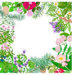 Big set essential oil plants ornament vector