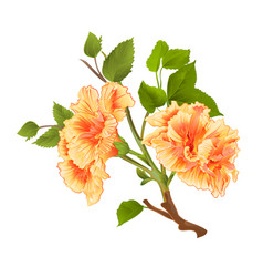 Branch yellow hibiscus tropical flowers vector
