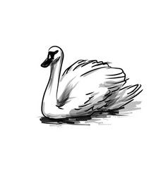 Ink sketch swan vector