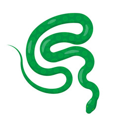 slither green python snake top view icon vector image
