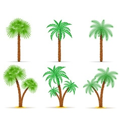 palm tree 09 vector image vector image