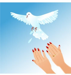 Hands of woman setting free white pigeon vector image
