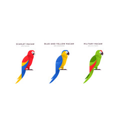macaw parrot bird isolated animal cartoon set vector image