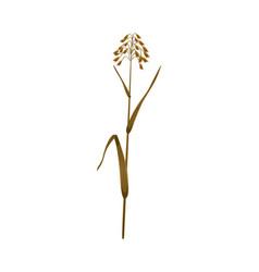 realistic oats ear vector image