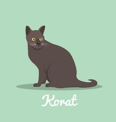 korat cute cat with green eyes design vector image