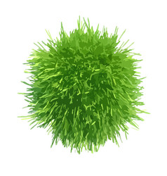 fresh green grass piece vector image
