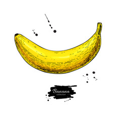 banana drawing isolated hand drawn object vector image
