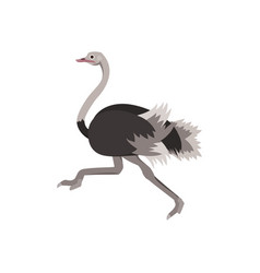 cartoon ostrich bird african exotic animal vector image