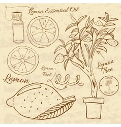 Hand drawn of a lemon set Web vector