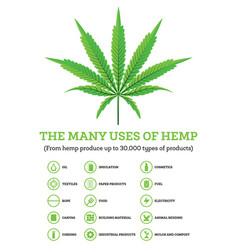 Industrial hemp infographic with icons of products vector
