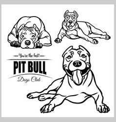 Pit bull - set isolated on vector