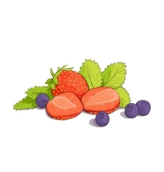 some strawberries and blueberries vector image vector image
