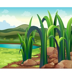 A river near the hills vector image
