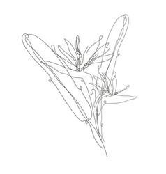 Decorative hand drawn strelitzia flower design vector