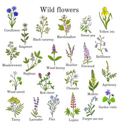 Wild flowers color set vector