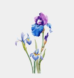 watercolor iris composition vector image vector image