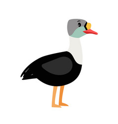 Eider cute cartoon bird vector