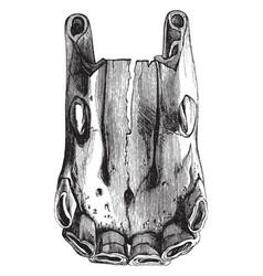 five year old horse teeth vintage vector image