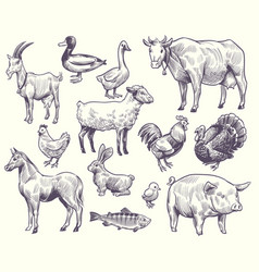 hand drawn farm animals and birds goat vector image