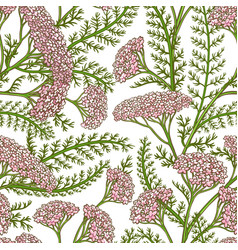 milfoil pattern vector image